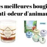 Les meilleures bougies anti-odeur d'animaux